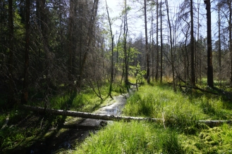Field Course Sweden